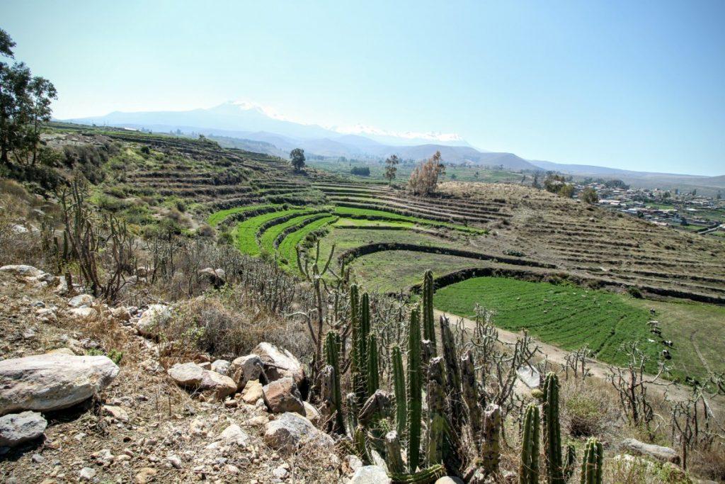 Terraced farmland all around