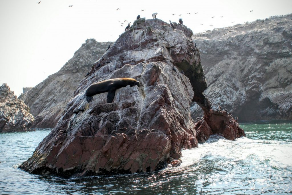 Sealions bask on the rocks