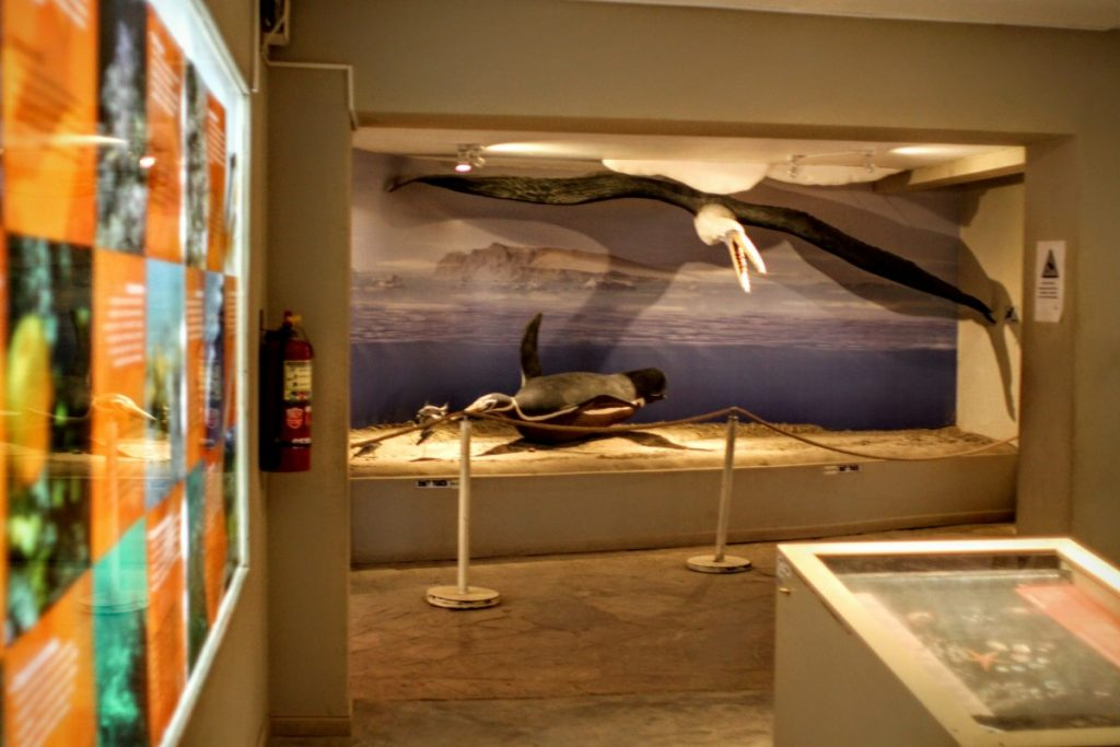 The museum covers the ecological history of the area